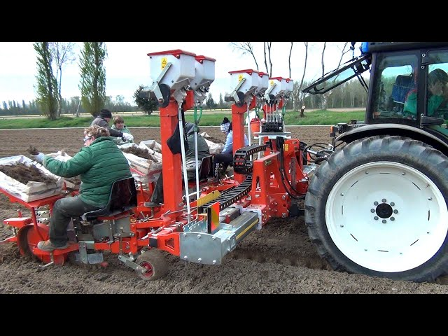 CHECCHI & MAGLI - FOXDRIVE PLUS 3 ROWS ITALY - STRAWBERRY TRANSPLANTER