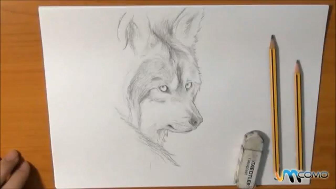 Como Desenhar Um Lobo Realista