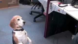 Repeat youtube video Funny Dog Confused By Magic Trick