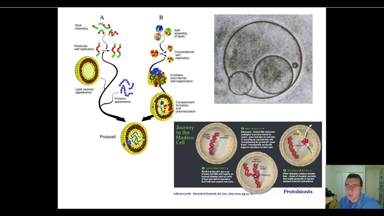 evolution of the genetic code part 1  [ 1280 x 720 Pixel ]