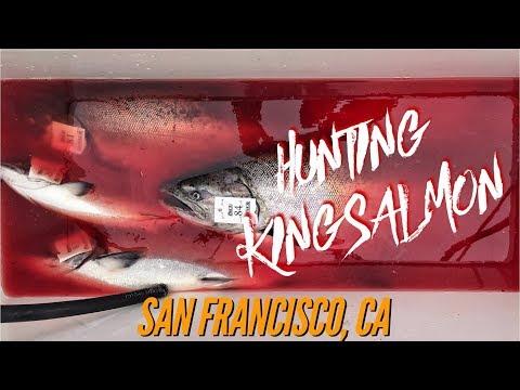 Hunting Pacific King Salmon - San Francisco, CA Fishing