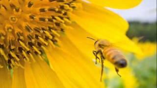 ① めざせポケモンマスター ② WILL ③ Wild Flowers ④ おはよう。 ⑤ dis‐ ...