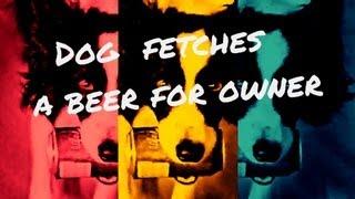 Dog Getting Beer For Owner