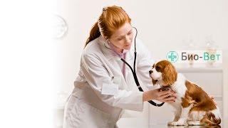 Канал ветеринарной клиники Био-Вет. г. Москва(, 2016-08-10T13:40:12.000Z)