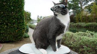 猫にサングラス!?飼い主さんの愛情あふれる理由があった