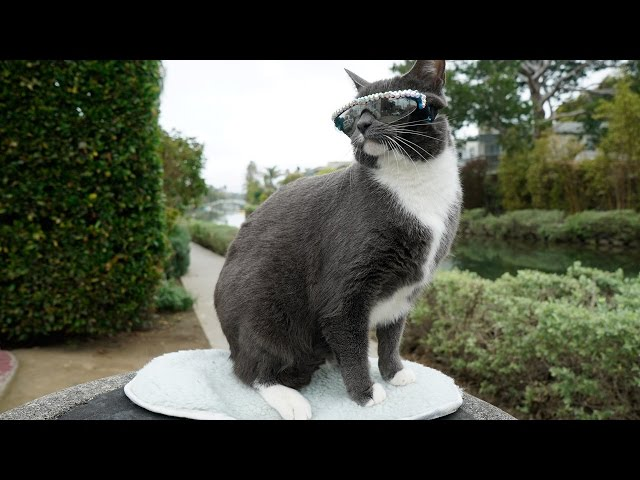 Cat Sunglasses: Moggie Wears Shades After Being Born Without Eyelids