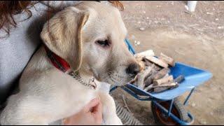去年までは月3回程、日帰りやお泊り保育で他犬と沢山遊ぶ機会を作ってい...
