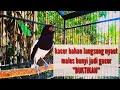 Kacer Gacor  Buka Paruh  Ampuh Naikan Emosi Lawan Siap Tarung Dan Ikut Gacor  Mp3 - Mp4 Download