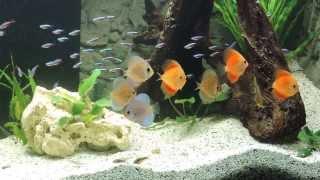 Incpiria 400l Diskus Aquarium