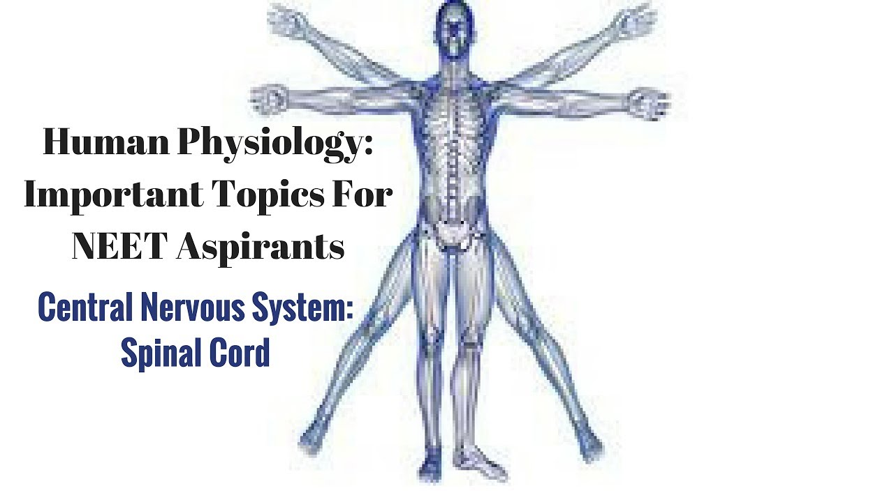 Central Nervous System: Spinal Cord- Human Physiology for NEET ...