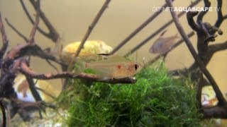 Rare tropical aquarium fish - Aquatics Live 2012, part 8