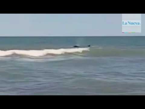 Un bañista quedó atónito cuando una orca le pasó por al lado
