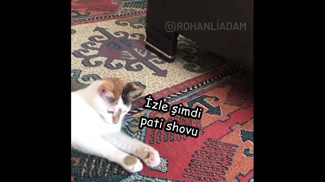 Hokkabazlık Yapan Kedi