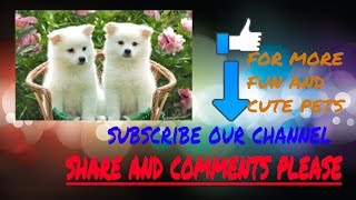 best videos of cute puppies compilations 2016  [best of]