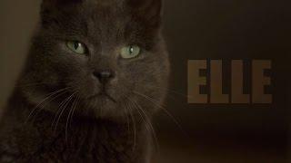 Elle Analysis: In Defense of Dark Comedy