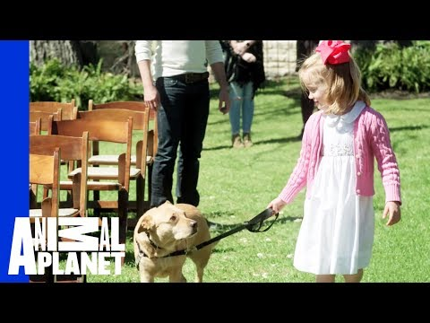 Can This Dog Be Trained To Walk Down The Aisle For A Wedding?