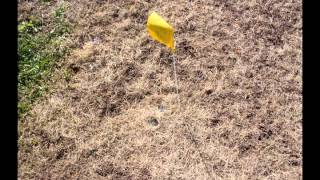 Renovating a Lawn by Reseeding