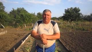 Огурцы в июле. часть 8  Первые соцветия  мучнистая роса(, 2015-08-17T11:20:59.000Z)