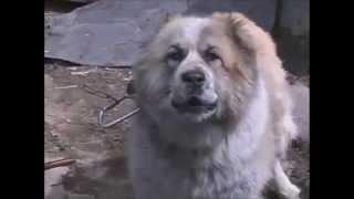 Действия при нападении собаки