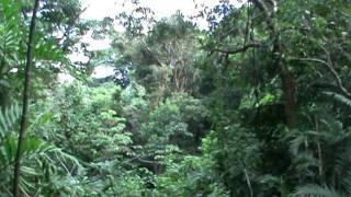 Hester in de Canopytour (boomslingeren) in Costa Rica