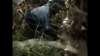 Download Video Bird hunting in Khonoma forest -  Nagaland, India MP3 3GP MP4