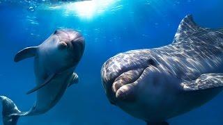 Поход в дельфинарий.(Всех детишек к экранам! Московский Дельфинарий в Петрозаводске. Отличные акробаты! -----------------------------------..., 2015-03-27T15:59:16.000Z)