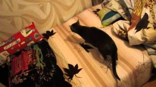 кот в новой квартире