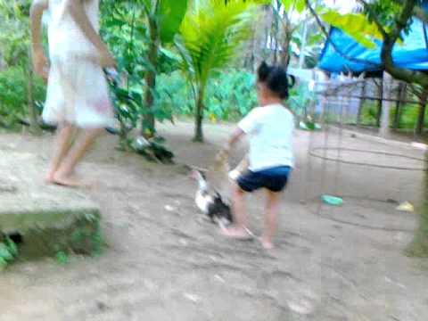 Anak kecil bermain sama bebek