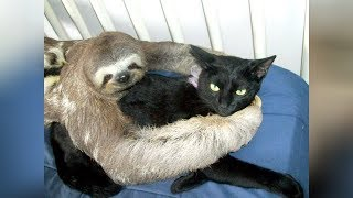 Super WEIRD \u0026 CUTE ANIMAL FRIENDSHIPS - I BET you will LAUGH FOR HOURS