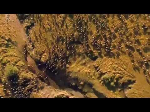 Trailer do filme Reino dos Felinos