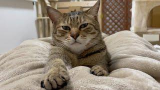 猫が邪魔すぎて動画を休もうとする飼い主