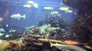 • Al Mahara • SeaFood Restaurant @ Burj Al Arab