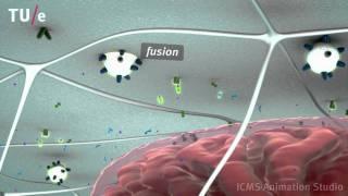 Energy metabolism in skeletal muscle cells