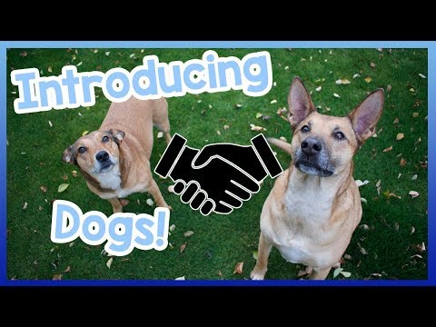 introducing-your-dog-to-other-dogs!-how-to-introduce-your-dog-to-other-dogs---friendly-and-easy!