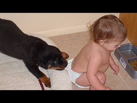 Rottweiler Dogs Protecting and Playing With Babies Kids Compilation  – Dog protects owners Videos