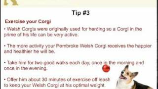 7 Ways To Stop Your Pembroke Corgi From Being Obese