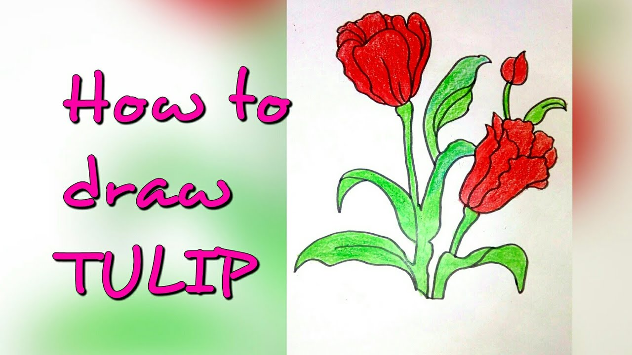 Drawing Tutorial How To Draw Tulip Flower Step By Step Easy