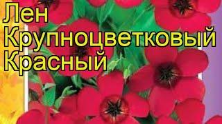 Лен крупноцветковый Красный. Краткий обзор, описание характеристик, где купить семена