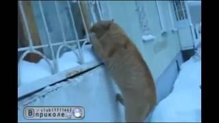 Кот лезет в окно Юмор! Прикол! Смех