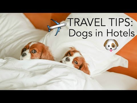 10 TRAVEL TIPS: DOGS IN HOTELS |Traveling with pets | How to prevent/reduce anxiety