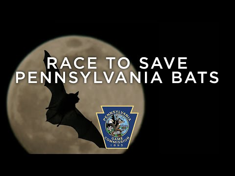 Race to Save Pennsylvania Bats
