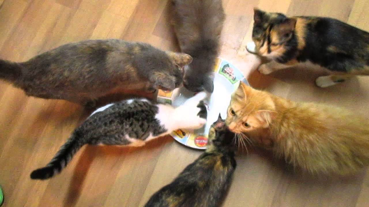Adorable cats attempt to eat invisible tuna youtube for Is tuna fish good for cats