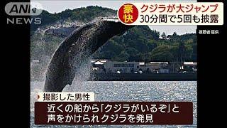 「クジラがいるぞ」30分で5回もジャンプ(19/06/04)