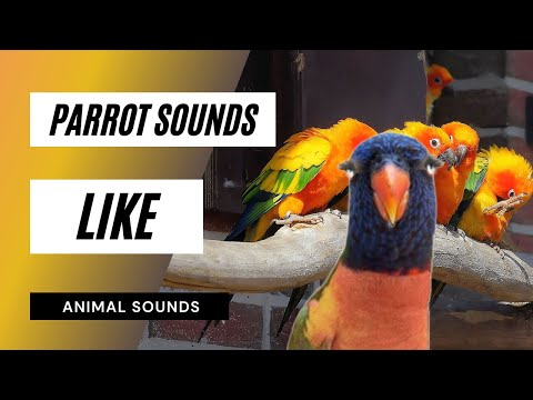 The Animal Sounds: Parrot Squawks - Sound Effect - Animation
