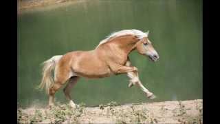 Kalējs - Le jeune fille au cheval couleur de lin (French album, op. 55) LIVE