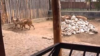 Рабочий день  Зоолог 22.05.13