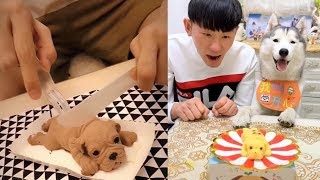 Dog Reaction to Dog Cake - Funny Dog Cake Reaction Compilation
