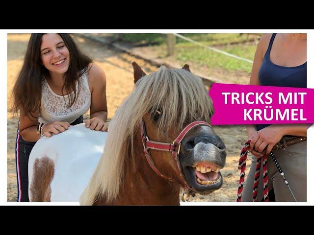 Alle Tricks mit IMMENHOF Pony Krümel 💪🏻