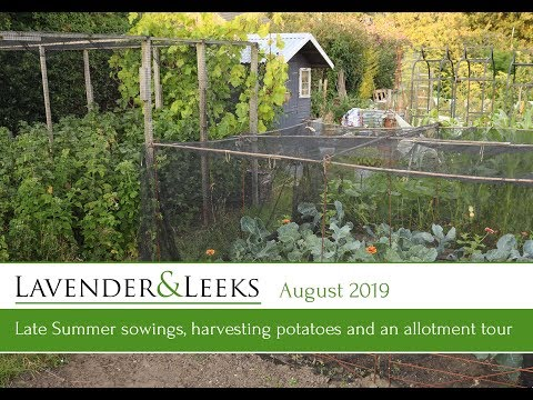 lavender-and-leeks---august-2019---late-summer-sowings,-potatoes-and-tour