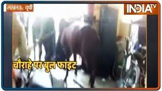 Lucknow: चौराहे पर जब 2 सांड आपस में भिड़े, लोगों में मच गया अफरातफरी | IndiaTV News